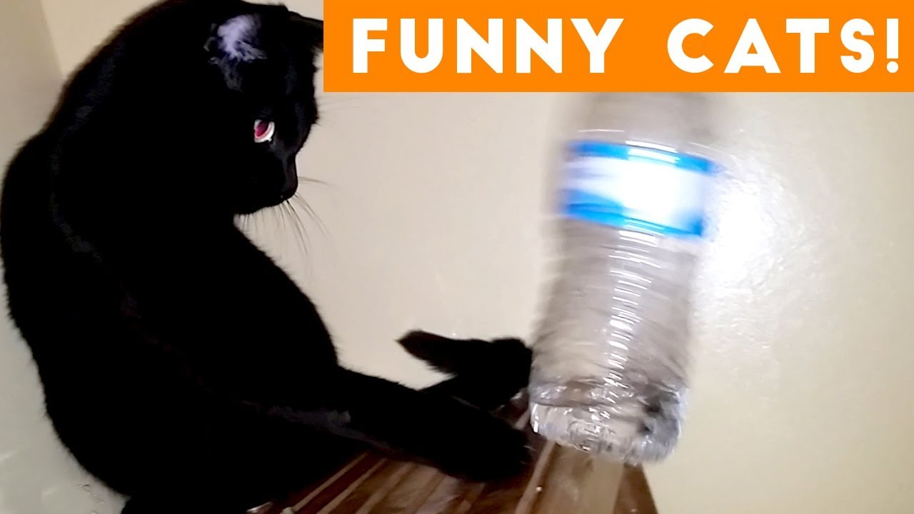 Try Not To Laugh At This Funny Cat Video Compilation | Funny Pet Videos 😹😺🙀