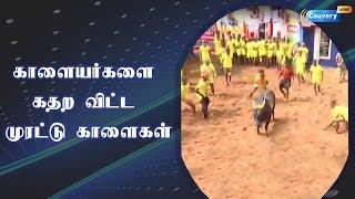 காளையர்களை கதற விட்ட  முரட்டு காளை | #MurattuKaalai