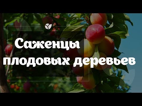 Саженцы плодовых деревьев | Agro-market.net