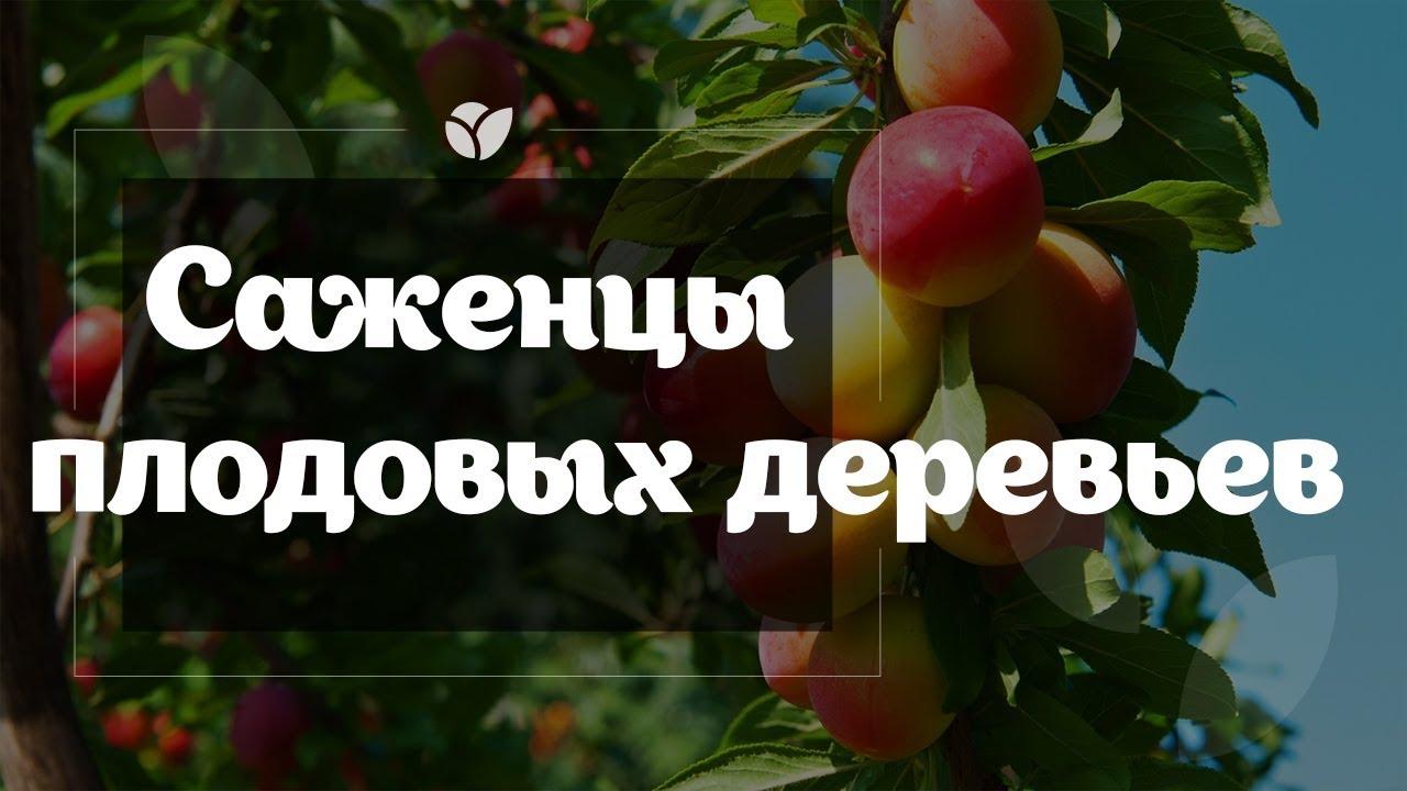 Купить саженцы яблони колоновидной в питомнике по выгодной цене. В каталоге можете посмотреть описания сортов, фото, цены, сравнить характеристики. Доставка по россии.