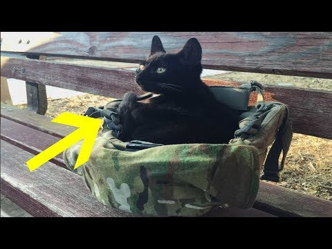 Soldier Captures Moments Of Stray Cat Choosing Him To Be His Forever Human