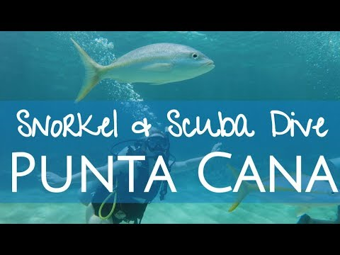 3 Days In Punta Cana! Snorkeling Catalina Island & Scuba Diving PADI Certification!
