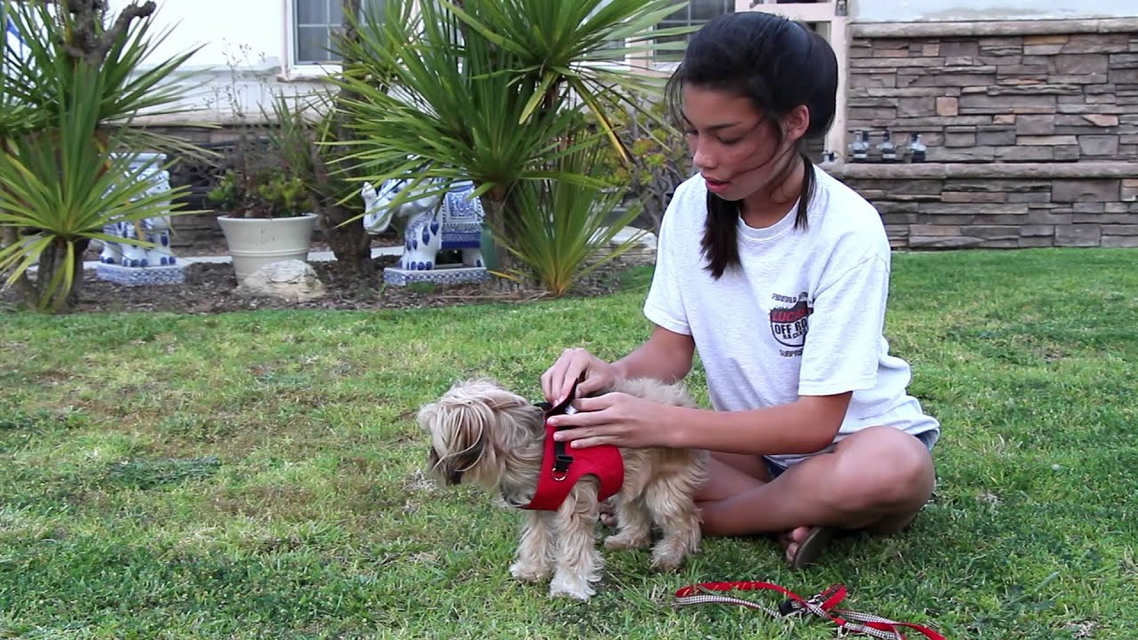Small Dog Harness) Vest Collar - Small Dog Best Harness Rep ...