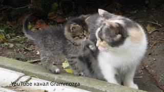 Кошка и котенок Видео для Детей Funny Cats and Kittens КОТЯТА.Смешной КОТИК.