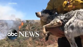 Man reunited with dog that went missing for 3 days amid wildfires | WNT