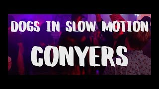 Dogs In Slow Motion - Conyers (Official Video)