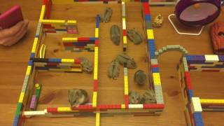 Hamster Maze Time with babies