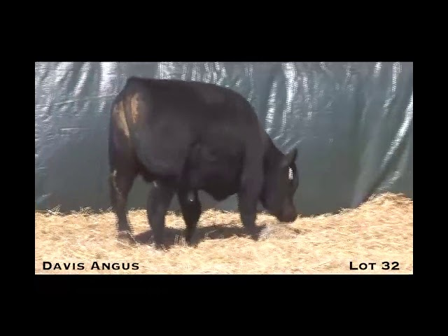 Davis Angus Lot 32
