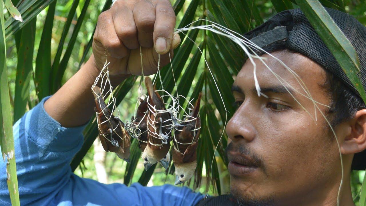 membuat jebakan burung dari anyaman kulit pohon|| creative unique bird trap