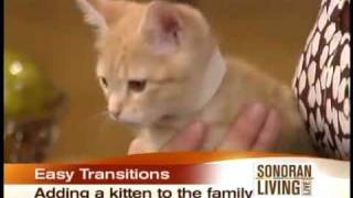 These tips will make adopting a kitten from a shelter easy.