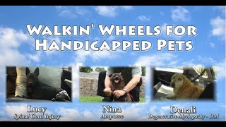 Walkin' Wheels Dog Wheelchair Movie Helps Handicapped Pets