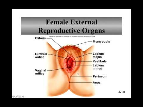 Female Reproductive System Recorded lecture