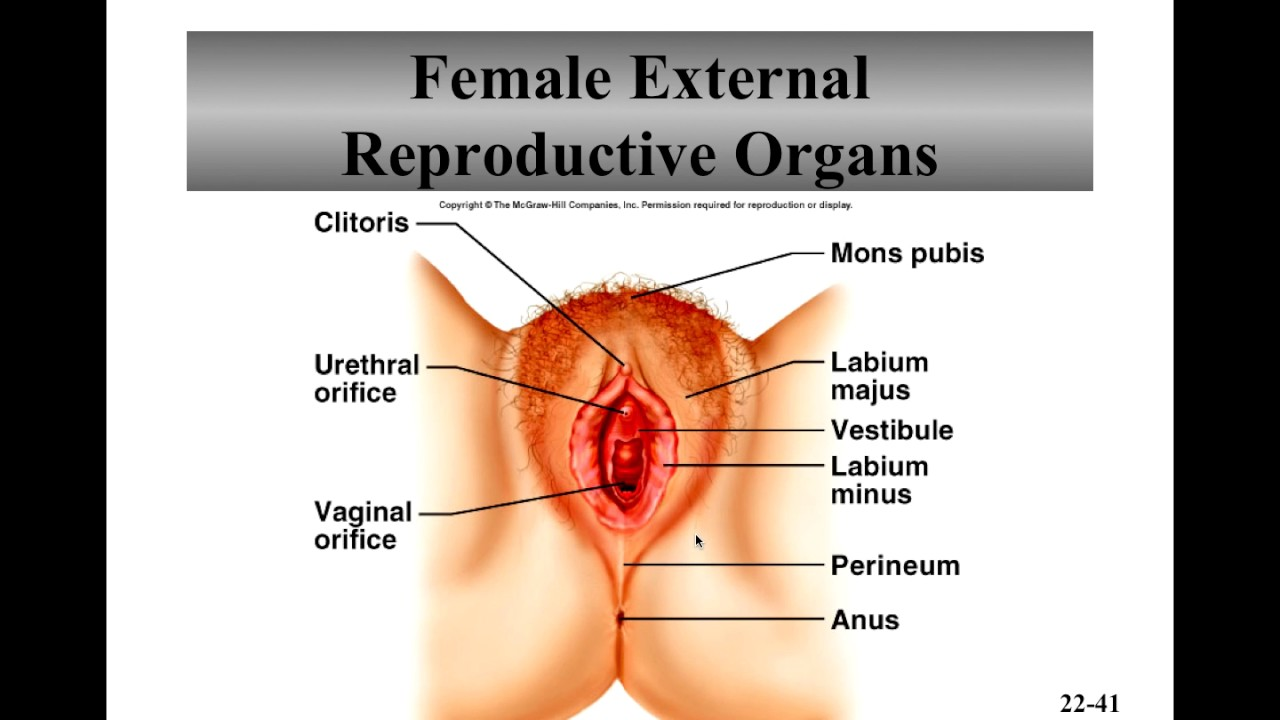Female Reproductive System Recorded Lecture Youtube