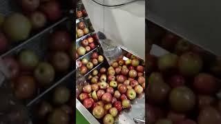 사과 착즙기 영상/태성식품포장기계