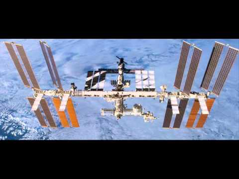 Marine plankton found outside of space shuttle
