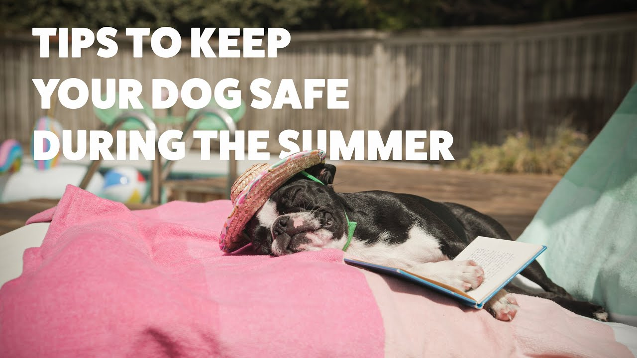 Hot Weather Dogs: Tips for Keeping Your Canine Cool