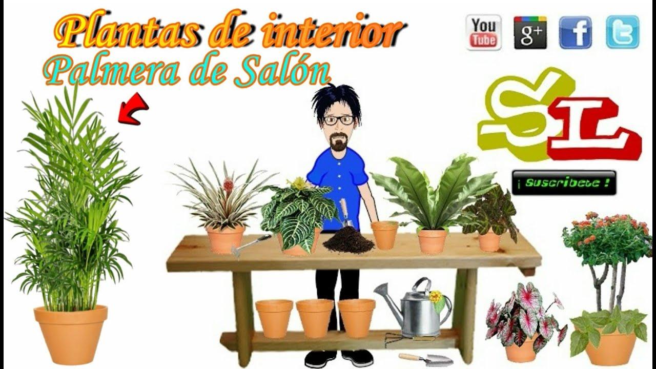 Palmera de sal n chamaedorea elegans plantas para - Plantas para salon ...