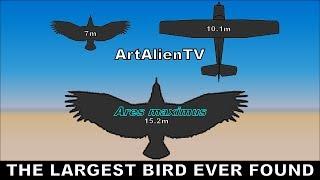 Life on Mars: Largest Bird Found in Our Solar System: Curiosity Rover. ArtAlienTV - 1080p