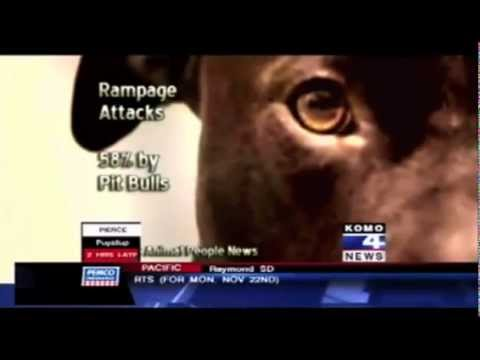 Why Pit Bulls Should be banned - Idiots that put dog rights over human rights.