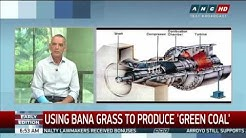 Bana grass used to produce 'green coal'