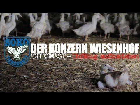 DER KONZERN WIESENHOF: Entenmast - Unfähig aufzustehen // SOKO Tierschutz e.V.