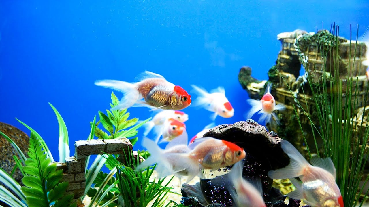 Fish tank electricity cost - How To Set Up A Freshwater Fish Tank