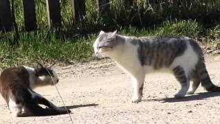 Кошки и птички 7
