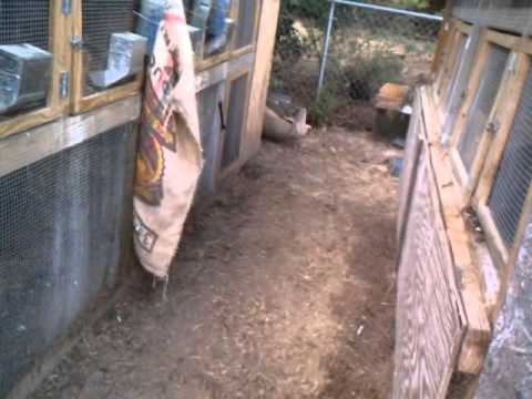 Goal for my chickens this spring....
