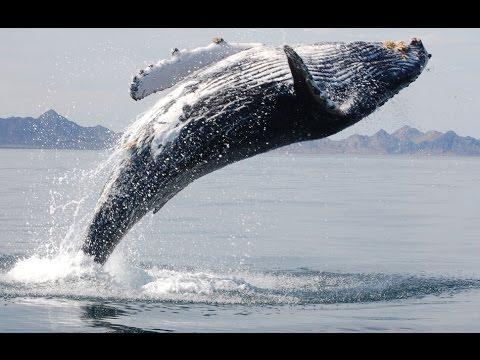 Whale dance. ~ Fumes (Desc.)