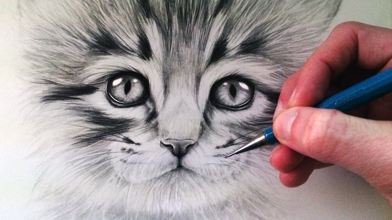 How to draw a kitten youtube ccuart Image collections