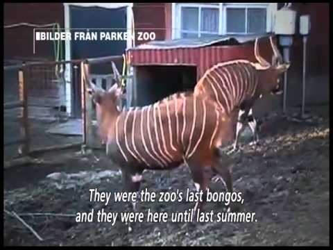 Investigation: Parken Zoo - (Kalla fakta, TV4 Sweden)