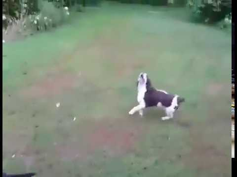 Dog Catching Ball Fail But Cute Fail