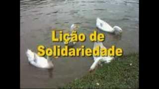 Lesson of Solidarity / Lição de Solidariedade (Brasil)