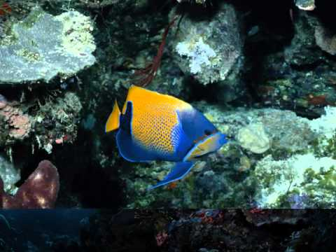 Fish - So Fellini