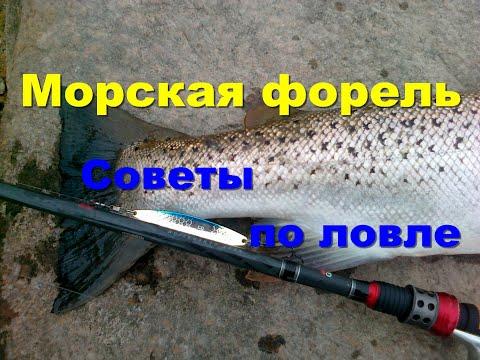 Морская рыбалка.Форель. Советы по ловле.