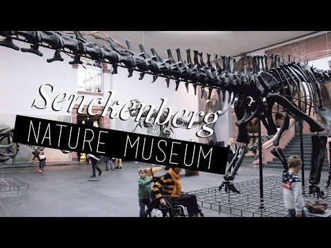 Senckenberg Museum Frankfurt | daneesaur