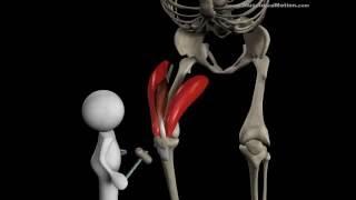 видео Анатомия мышц ног. Качаемся правильно.