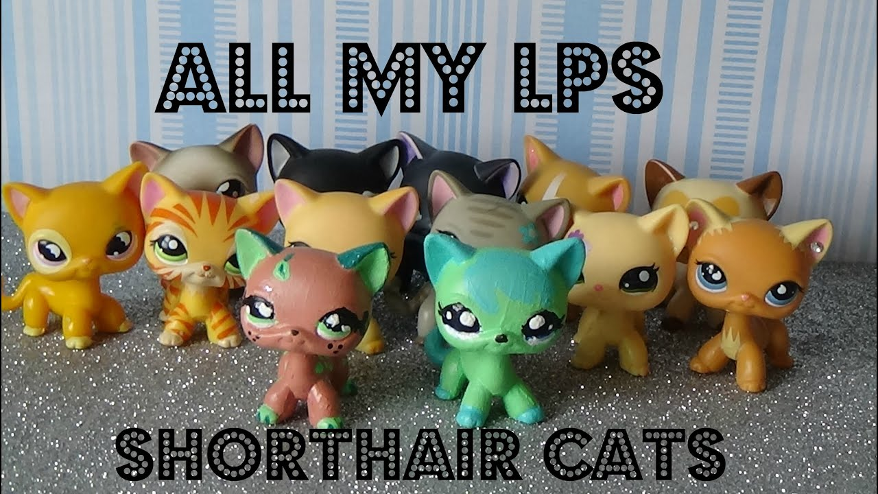 All My Lps Shorthair Cats Lps Savvytv Youtube