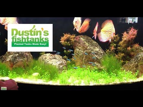 High tech co2 aquarium plant tips glosso glossostigma for Dustins fish tanks