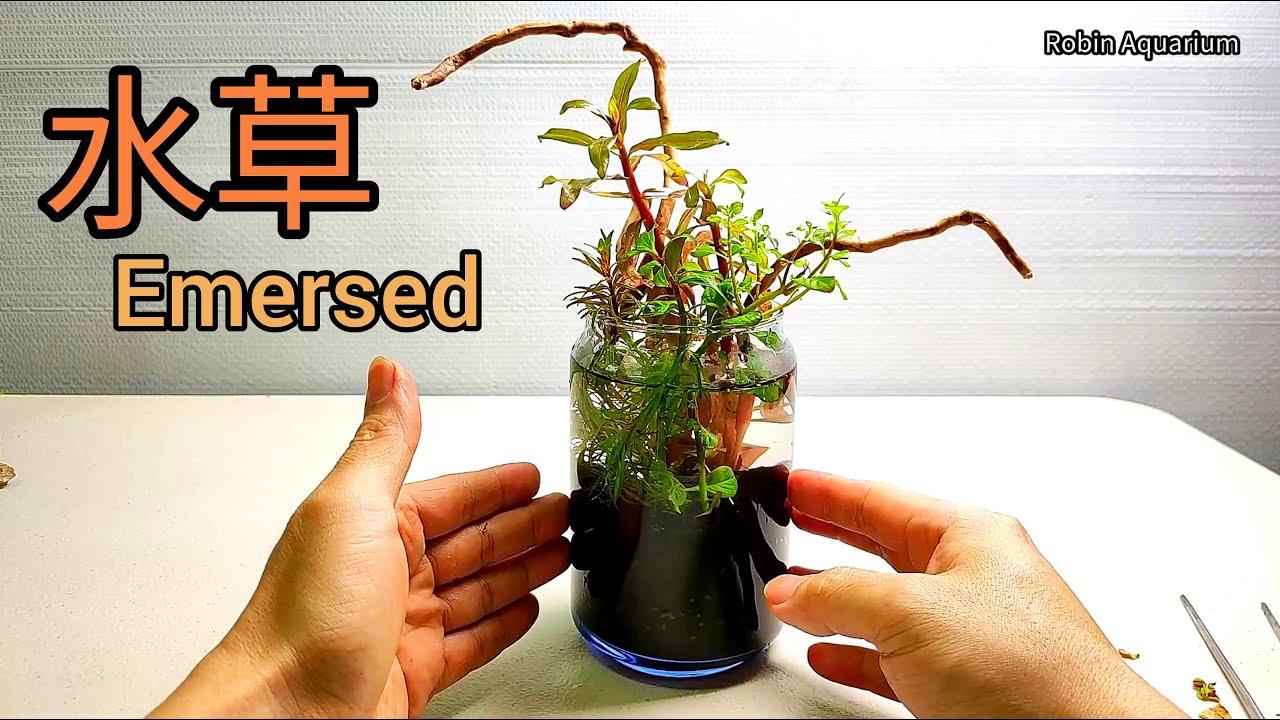 夏天就是要這樣玩  將水草變成盆栽藝術品 水草轉變水上葉栽培  插花侘草水景盆栽 禪意十足的景觀植栽