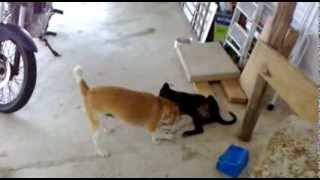 UFC - Ultimate Fighting canine - Hanna vs Nina