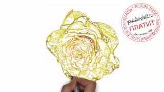 Как нарисовать цветок желтую розу карандашом поэтапно(Как нарисовать дружную семью поэтапно карандашом за короткий промежуток времени. Видео рассказывает о..., 2014-07-02T05:41:00.000Z)