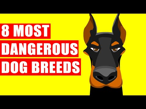 8 Most Dangerous Dog Breeds Ever Existed