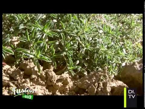 Copyr giardinaggio le erbe aromatiche il tempo balsamico delle