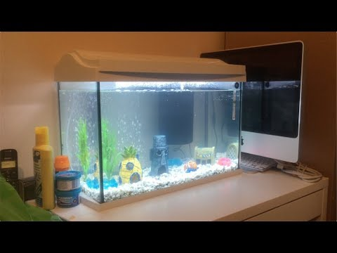 NEW PET FISHES - BLACK MOOR & ORANDA GOLDFISH TANK SETUP! [SPONGEBOB THEME]