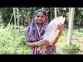 Village Food || So Yummy Koral Fish Curry Cooking In My Village || Bengali Fish Curry Cook By Mother