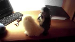 Порно котяра