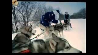 Кто быстрее упряжка Хаски или Тройка лошадей