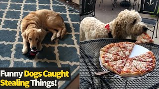 Top 15 Moments Of Cheeky Dogs Stealing Things | Funny Dog Videos