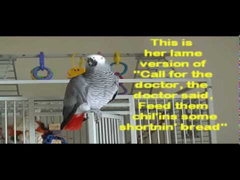 RUBY THE TALKING PARROT (WITH SUBTITLES) PART 3